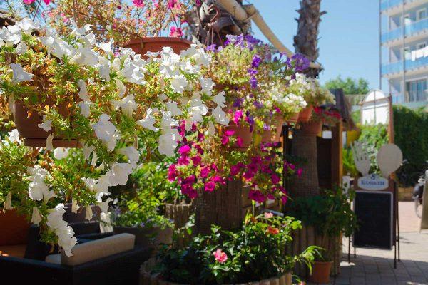 piante-e-fiori-bagni-gilberto